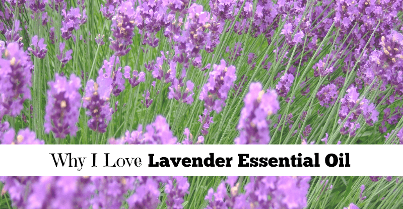 Why I Love Lavender Essential Oil fb