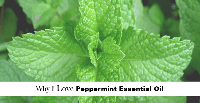 Why I Love Peppermint Essential Oil fb