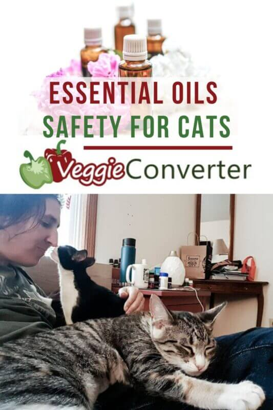 essential oils safety for cats